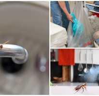 Как протравить тараканов в доме