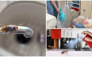 Как прогнать тараканов из квартиры