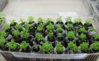 Как посеять семена в таблетки
