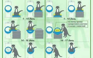 Как приучить кошку ходить в туалет