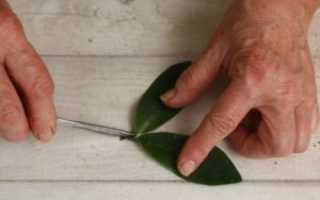 Как развести замиокулькас из листа