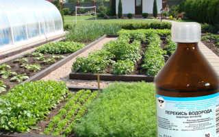 Как обрабатывать растения перекисью водорода