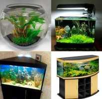 Как правильно сделать аквариум своими руками