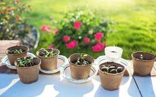 Как правильно выращивать рассаду цветов