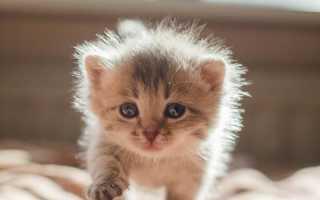 Как различить котят мальчик или девочка