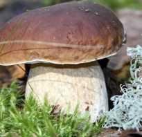 Как приготовить белый гриб на зиму