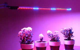 Как пользоваться лампой для цветов