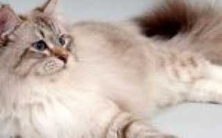 Как отучить кота какать в неположенном месте