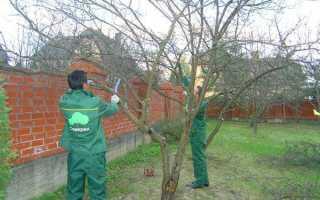 Как обрезать взрослые деревья