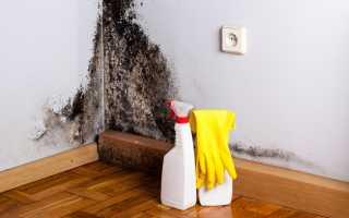 Как отмыть черную плесень в ванной