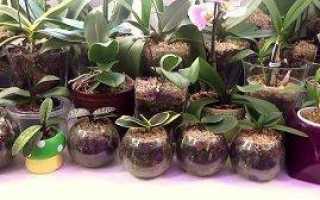 Как поливать орхидею в закрытой системе