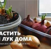 Как проращивать лук на зелень