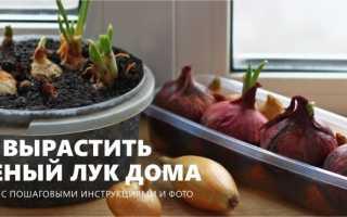 Как посадить зеленый лук в домашних условиях