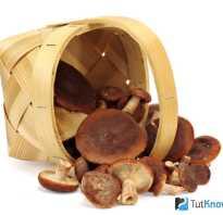 Как приготовить горчаки грибы