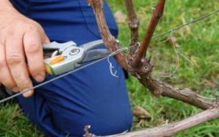 Как обрезать виноград для посадки видео