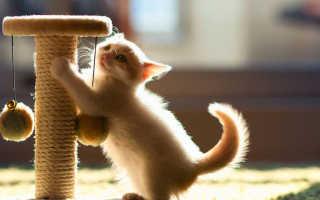 Как приучить кота драть когтеточку