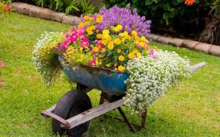 Как правильно сделать клумбу для цветов