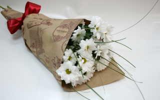 Как рассадить хризантему из букета