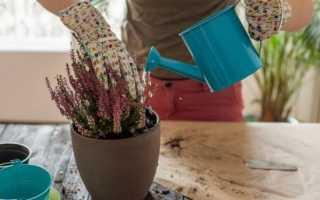 Как правильно подкормить домашние цветы