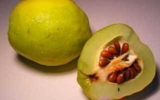 Как посадить айву из семян