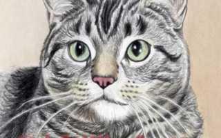 Как раскрасить кота карандашами