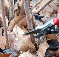 Как обрезать простую малину осенью