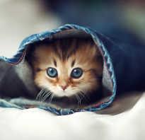 Как понять кот мальчик или девочка