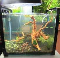 Как оформить дно аквариума