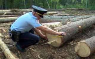 Как получить разрешение на вырубку леса