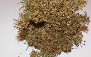 Как отличить семена петрушки от моркови