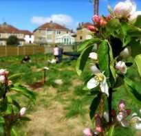 Как оформить фруктовый сад