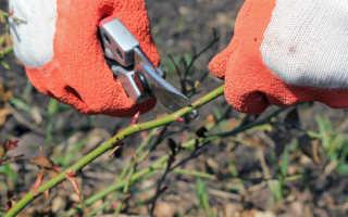 Как обрезать осенью кусты роз