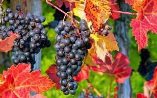 Как подготовить виноград к зиме в хабаровске