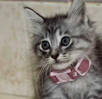 Как одеть ошейник от блох на кошку