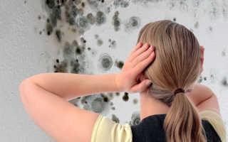 Как отмыть плесень со стен