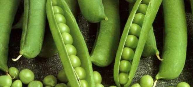 Как подготовить семена гороха к посадке