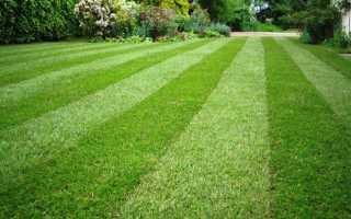 Как правильно посадить газон видео