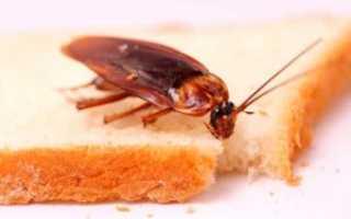 Как потравить тараканов в домашних условиях самостоятельно